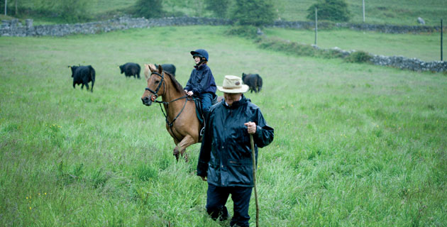 ely-farm-horses